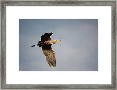 Framed Print featuring the photograph Great Blue Heron In Flight by Ann Bridges