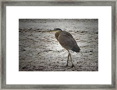 Great Blue Heron In The Snow Framed Print by Sharon Talson