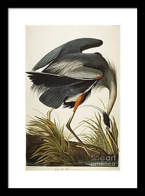 Beak Framed Prints