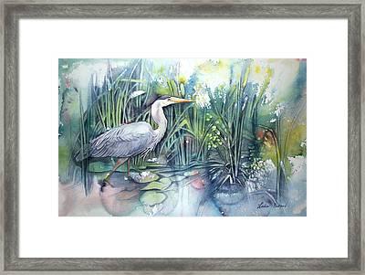 Great Blue Heron Framed Print by Leslie Redhead