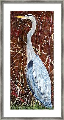 Great Blue Heron Framed Print by Marilyn  McNish