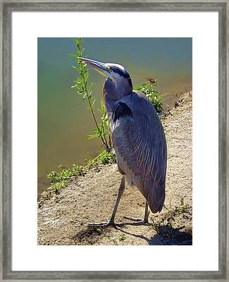 Framed Print featuring the photograph Great Blue Heron by Mariola Bitner