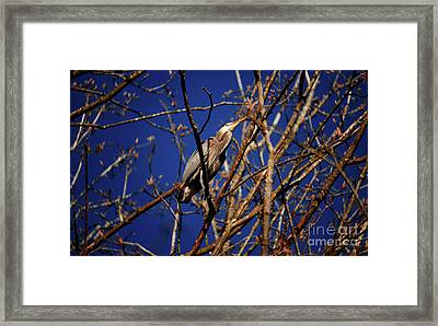 Framed Print featuring the photograph Great Blue Heron Nesting 2017 - 1 by Terry Elniski