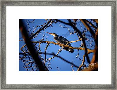 Framed Print featuring the photograph Great Blue Heron Nesting 2017 - 2 by Terry Elniski