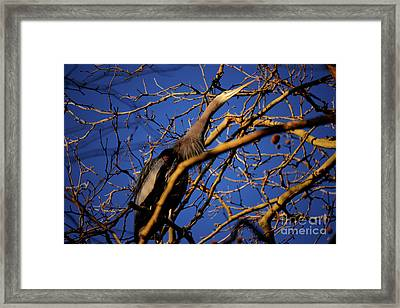 Framed Print featuring the photograph Great Blue Heron Nesting 2017 - 3 by Terry Elniski