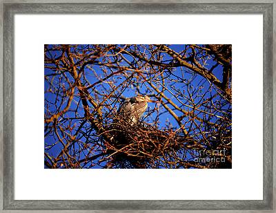 Framed Print featuring the photograph Great Blue Heron Nesting 2017 - 4 by Terry Elniski