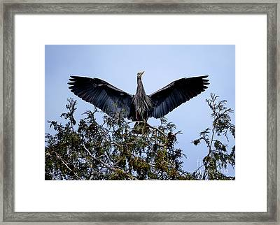 Framed Print featuring the photograph Great Blue Heron Nesting 2017 - 7 by Terry Elniski