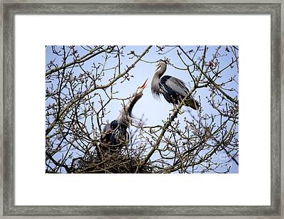 Framed Print featuring the photograph Great Blue Heron Nesting 2017 - 8 by Terry Elniski