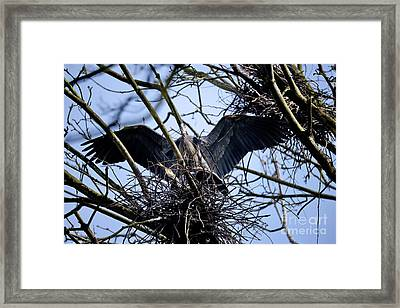 Framed Print featuring the photograph Great Blue Heron Nesting 2017 - 9 by Terry Elniski
