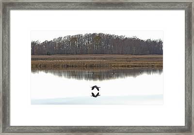 Great Blue Heron Over Glassy Water Framed Print by Jennifer Nelson