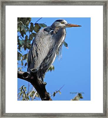 Great Blue Heron Perched Framed Print by DigiArt Diaries by Vicky B Fuller