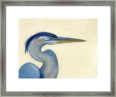 Great Blue Heron Portrait Framed Print by Charles Harden