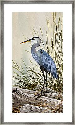 Great Blue Heron Shore Framed Print by James Williamson
