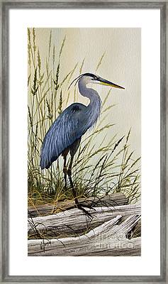 Great Blue Heron Splendor Framed Print by James Williamson