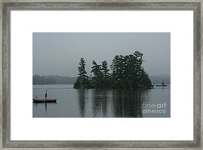 Great Blue Heron Standing Guard Framed Print