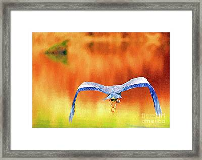 Framed Print featuring the digital art Great Blue Heron Winging It Photo Art by Sharon Talson