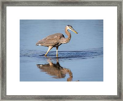 Framed Print featuring the photograph Great Blue Heron With A Small Meal by Ricky L Jones