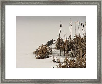 Great Blue In White Framed Print by Athena Ellis