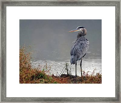 Great Blue Heron Landscape Framed Print
