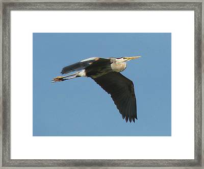 Framed Print featuring the photograph Great Blue by Peg Urban