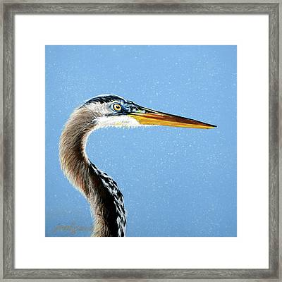 Great Blue Walter Framed Print