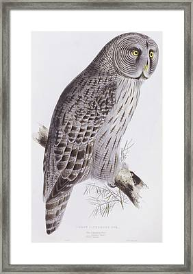 Great Cinereous Owl Framed Print by John Gould