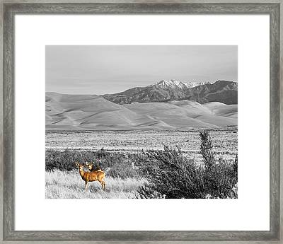 Great Colorado Sand Dunes Deer Framed Print by James BO Insogna
