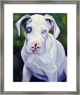 Great Dane Harlequin Puppy Framed Print by Lyn Cook