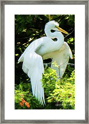 Great Egret Stretching Framed Print