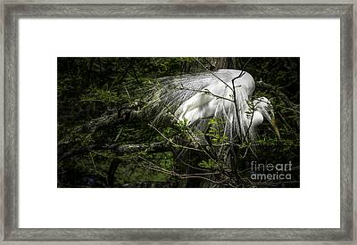 Great Egret #2 Framed Print