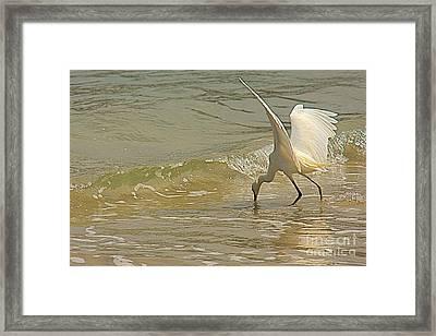 Great Egret 2 Framed Print