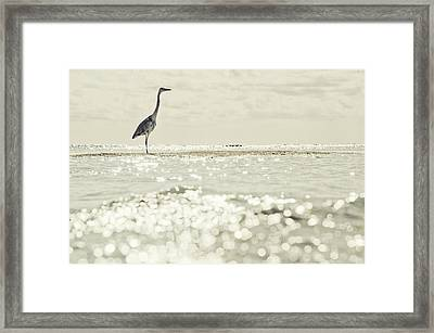 Great Egret Aka Great White Grey Heron In Maldives Framed Print