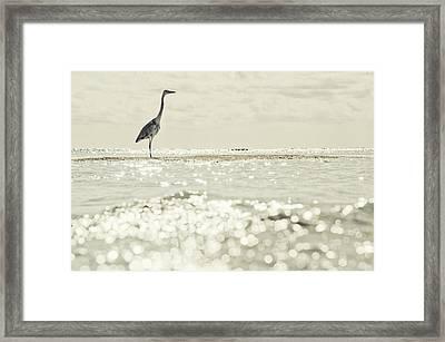 Great Egret Aka Great White Grey Heron In Maldives Framed Print