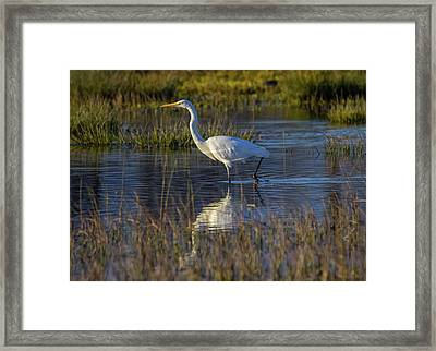 Great Egret, Ardea Alba, In A Pond Framed Print by Elenarts - Elena Duvernay photo