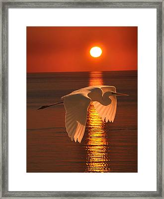 Great Egret At Sunset Framed Print
