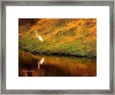 Great Egret At The Lake Framed Print