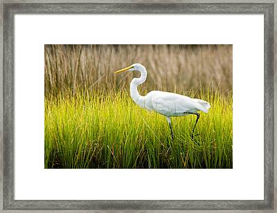 Framed Print featuring the photograph Great Egret In Cedar Point Marsh by Bob Decker