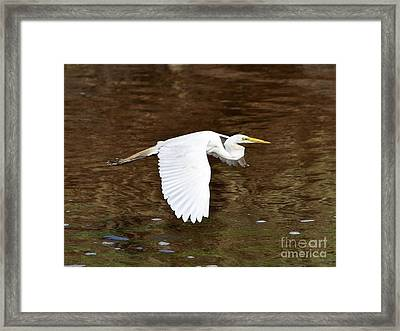 Great Egret In Flight Framed Print by Al Powell Photography USA