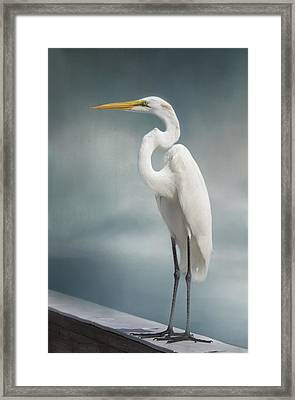 Great Egret Framed Print by Kim Hojnacki