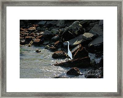 Framed Print featuring the photograph Great Egret On Sunny Seaside Rocks by Susan Wiedmann