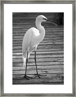 Great Egret On The Pier - Black And White Framed Print