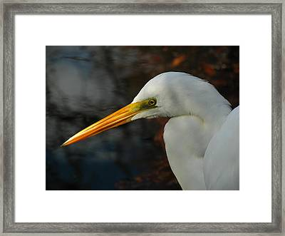 Great Egret Portrait Framed Print by Juergen Roth