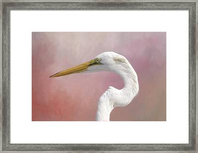 Great Egret Profile Framed Print by Kim Hojnacki