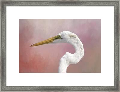 Great Egret Profile Framed Print