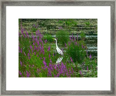 Great Egret - Purple Framed Print