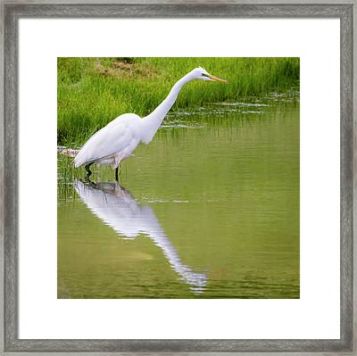 Framed Print featuring the photograph Great Egret Ready To Pounce by Ricky L Jones