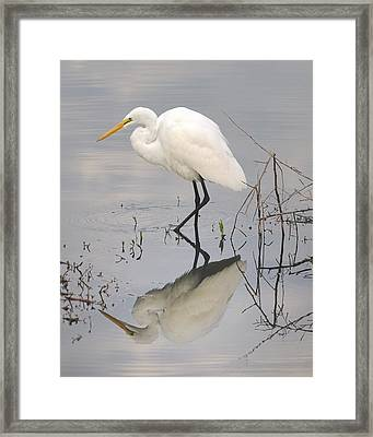 Great Egret Reflected Framed Print by Brian Grant