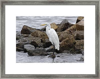 Great Egret Framed Print by Sandy Keeton