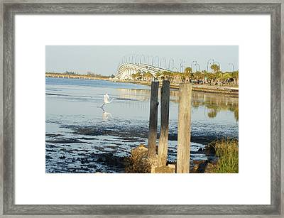 Framed Print featuring the photograph Great Egret Takes Flight by Lynda Dawson-Youngclaus