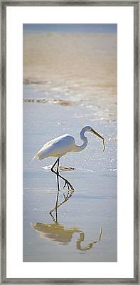 Great Egret With Prey Framed Print